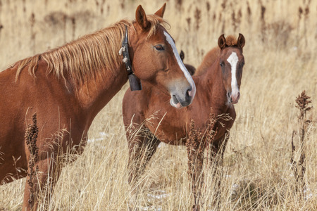 mare and foal: Chestnut mare with foal at the autumn field