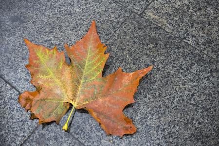granite slab: Autumn leaf on the granite slab Stock Photo