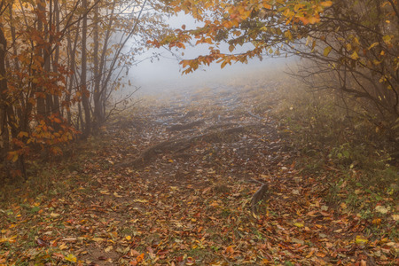Path of fallen leaves, fog in the autumn forest