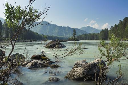 katun: Pine on stone small island in the river Katun, mountain Altai, Russia Stock Photo