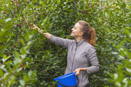 siberia: Teen Girl collects cherries in Siberia at their summer cottage Stock Photo
