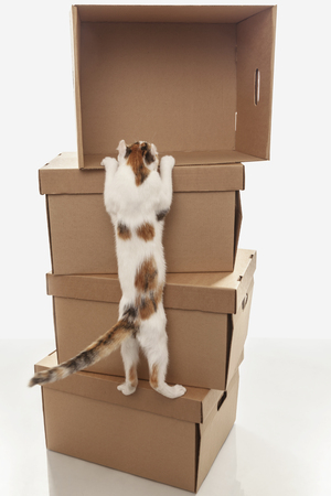 A young cat climbs into an empty cardboard box, standing at the top of other boxes on a white background