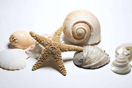 cockleshells: Starfish and cockleshells Stock Photo