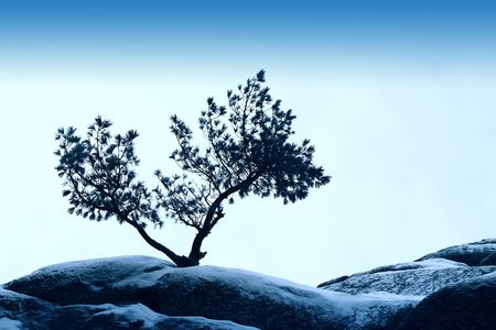 clod: alone tree stand over blue sky on stone