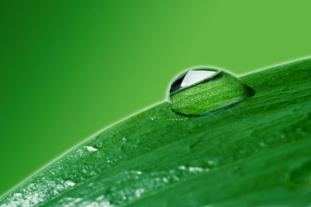 closeups: close-ups water drops on green plant