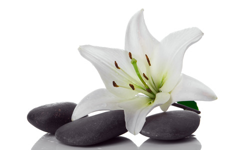 madonna: madonna lily and spa stone on white