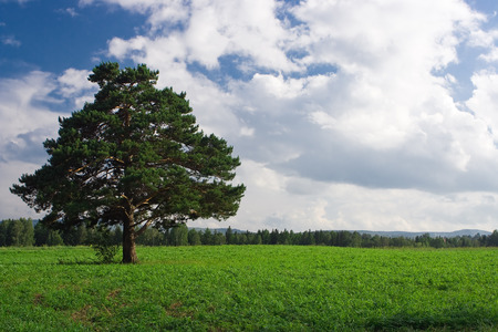 Landscape  tree on the field under blue sky and white clouds Stock Photo - 1462894