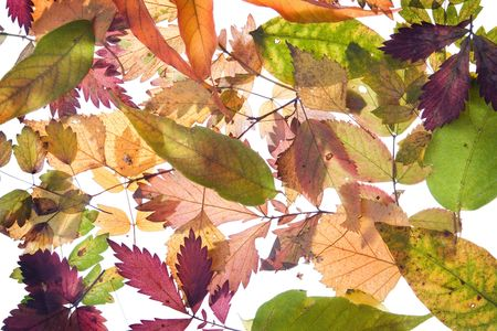 backround from fallen autumn leaves many colours photo