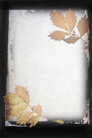 autumn organic frame  background leaves and textured old paper Stock Photo - 2075073