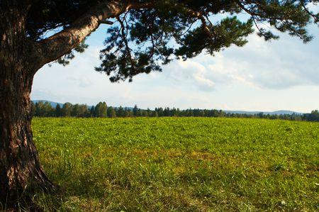 alone tree in field under sky Stock Photo - 2711570
