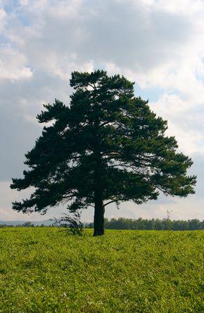 alone tree in field under sky Stock Photo - 2711567