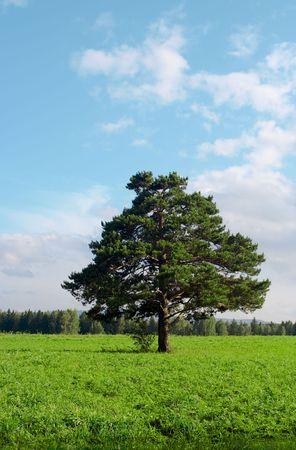 alone tree in field under blue sky Stock Photo - 3288461