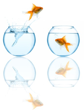 goldfish leaping in aquarium on white background photo