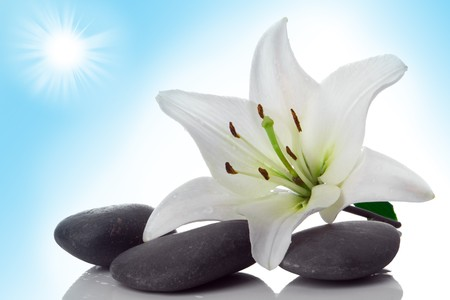 madonna lily and spa stone on white photo