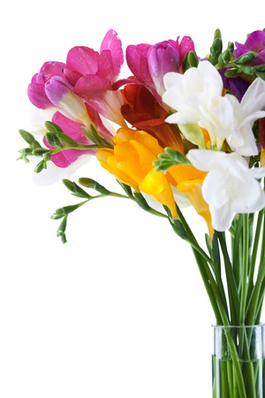 freesia: freesia  flowers isolated on the white  background