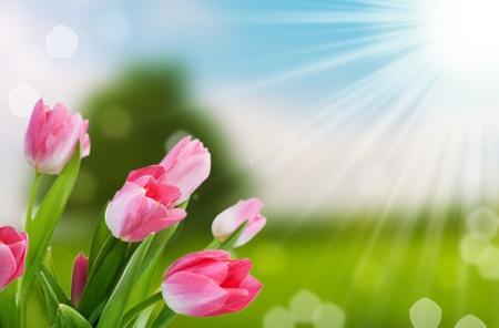 Fondo de bokeh de primavera de flores y naturaleza con rayo de sol