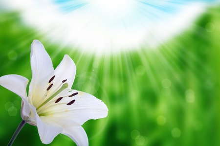 flower and nature spring bokeh background with sun beam photo