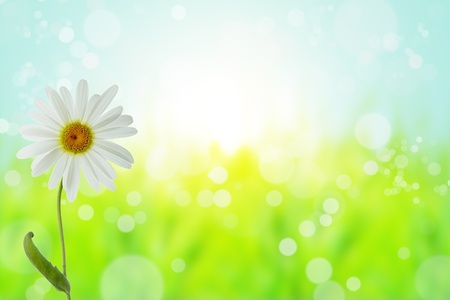 flower with  bokeh summer background Stock Photo - 10020769