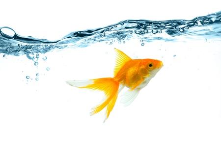 goldfishes: l'acqua bolle e spruzzi d'acqua in blu Archivio Fotografico