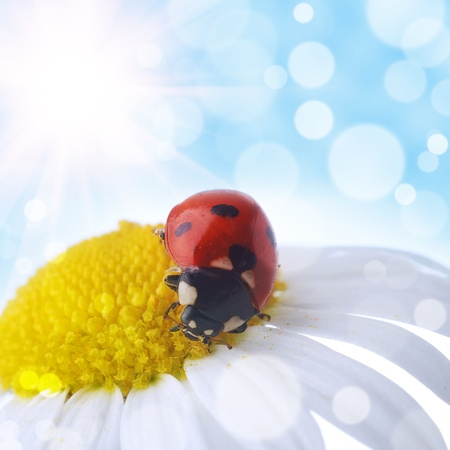 flower and  ladybug with  bokeh summer background Stock Photo - 10020979