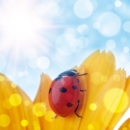 flower and  ladybug with  bokeh summer background Stock Photo - 10020986