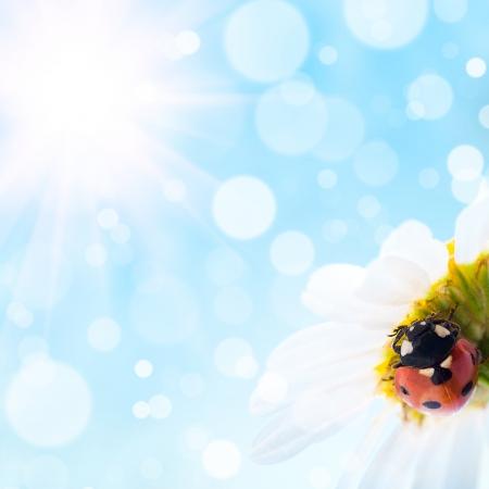 bloemen en lieveheersbeestje met bokeh zomer achtergrond Stockfoto