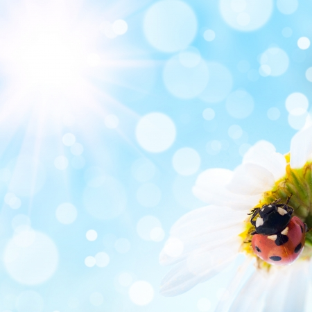 flower and  ladybug with  bokeh summer background
