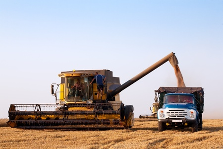 combine harvester in field wheat