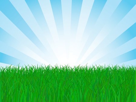 Field of Grass, Vector Illustration Stock Vector - 12423821