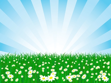 vector chamomile flower field and sky  Stock Vector - 12423824
