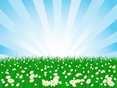 farm land: vector chamomile flower field and sky