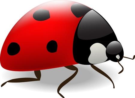vector  ladybug Stock Vector - 12423858
