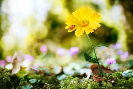 flower on nature background with bokeh photo