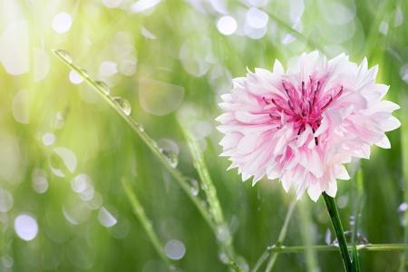 Groen gras met druppels dauw Stockfoto