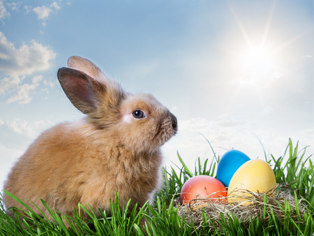 easter color eggs and rabbit on green grass under blue sky with sun Stock Photo - 25716824