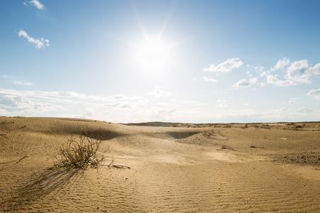dunes: Desert with Sand Dunes