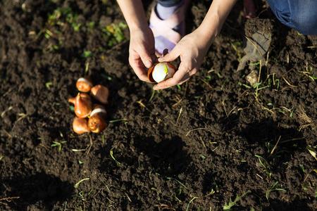 bombillas: Trabajos del jardín. Mujer joven que trabaja en el jardín. Estilo de vida saludable Foto de archivo