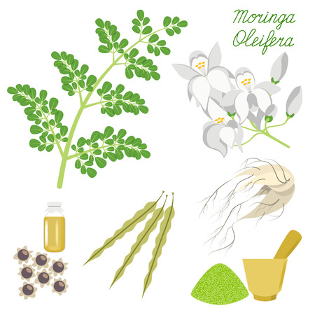 Superfood Moringa. Set of leaves, flowers, seeds and root on isolated background.