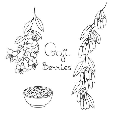 wholesome: Superfood Goji. Set of berries and flowers  on isolated background. Illustration
