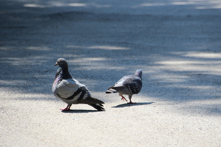 Breaking up concept, pigeons on the street, separating couple Stock fotó