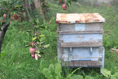 Old empty beehive in the garden near an apple tree in a foggy morning, close view Stock fotó
