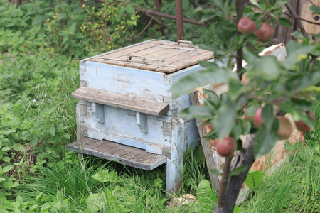 Rustic beehive in the garden with open lid, no bees inside near an apple tree