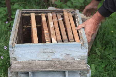 An experienced beekeeper inspects an old empty beehive with frames inside, close view
