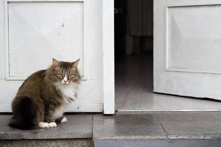 Brave fat cat guarding a white door, standing in front, copy space, hope you brought a wine, welcome