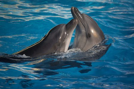 Happy dancing dolphins in the swimming pool high sea
