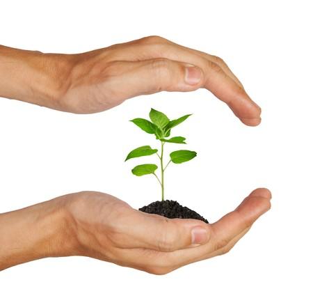 siembra: Creciente planta verde en una mano aislada sobre fondo blanco