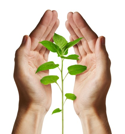Growing green plant in a hand isolated on white background Stock Photo - 7237319