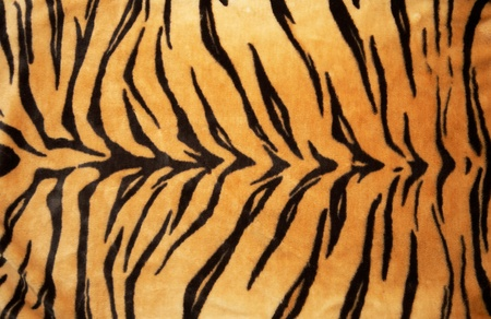 Texture of a Tiger skin (Fur ) Stock Photo