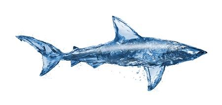 Water haai, geïsoleerd op witte achtergrond Stockfoto