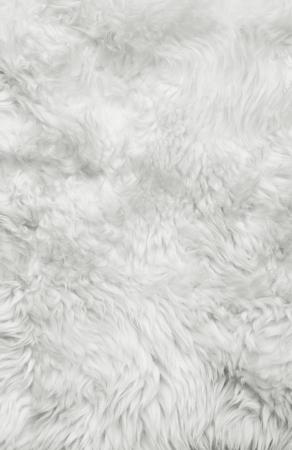 Sfondo di pelliccia bianco Primo piano